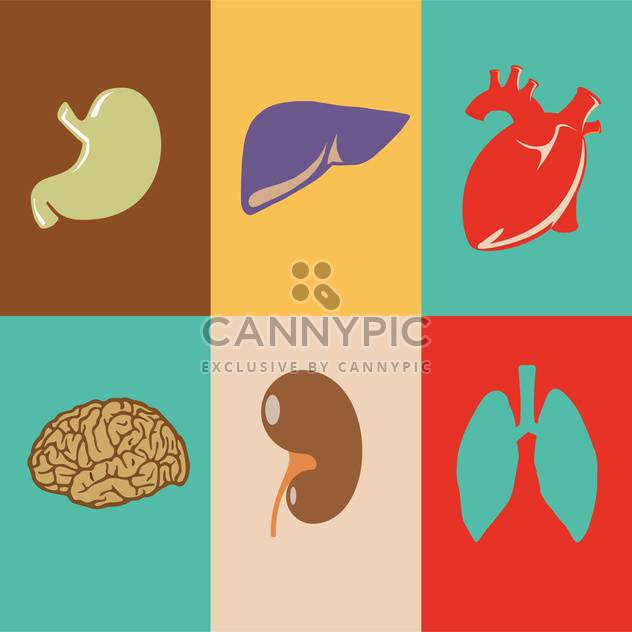 colorful vector illustration of human organs in squares - Free vector #125934