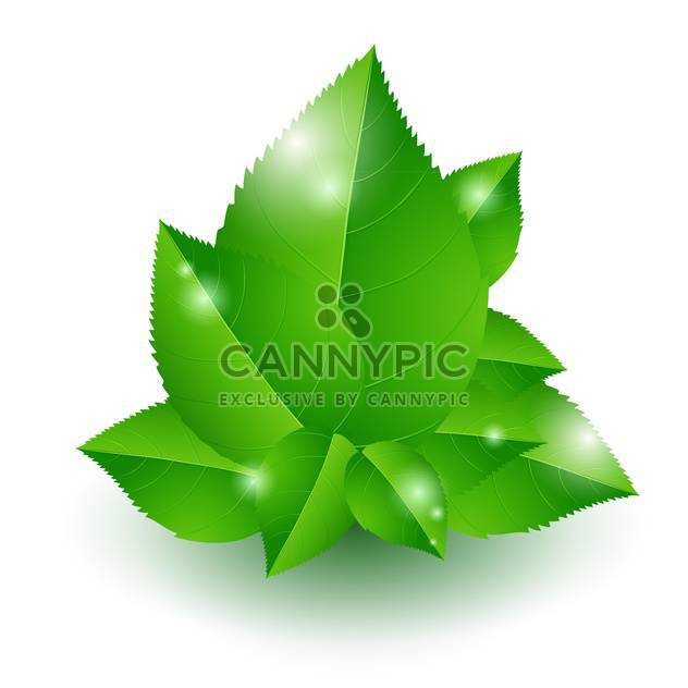 Vector illustration of shiny green leaves on white background - Free vector #126964