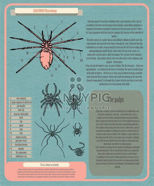 Archnids Physiologie Infographik banner - Kostenloses vector #134364