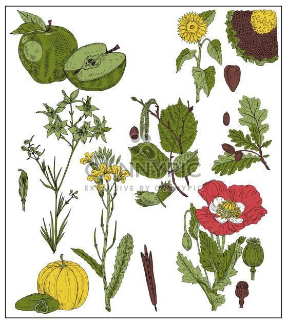 Satz von Früchten und Samen, die isoliert auf weiss - Free vector #135084