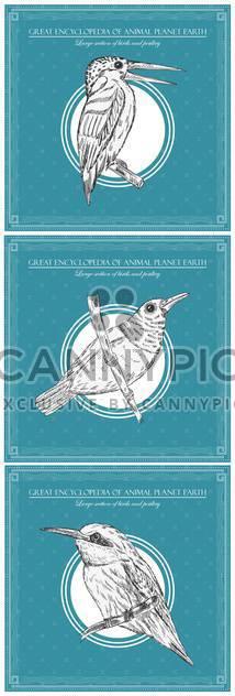 Buchfink Vogel Illustration für große Enzyklopädie der Tiere - Kostenloses vector #135154