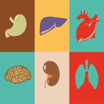 colorful vector illustration of human organs in squares - vector gratuit #125934