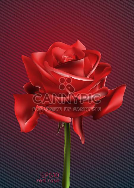 Vector illustration of beautiful red rose - Free vector #128954