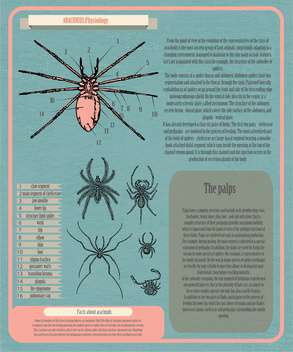 archnids physiology infographic banner - Kostenloses vector #134364